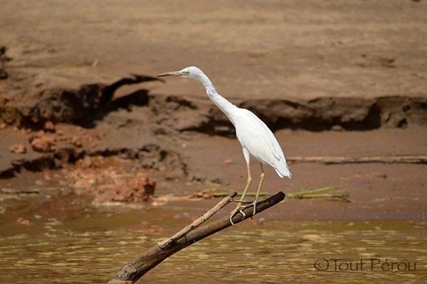 Amazonie Madre de Dios Forum Blog Tout Pérou