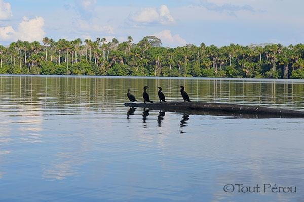 Lac Sandoval Réserve Tambopata Forum Blog Tout Pérou