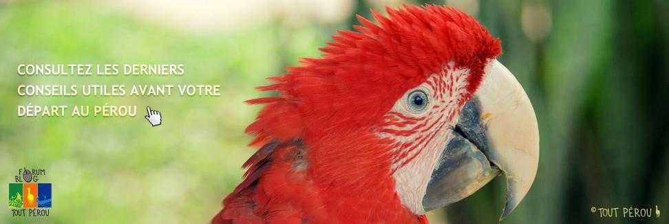 Ara Amazonie Pérou